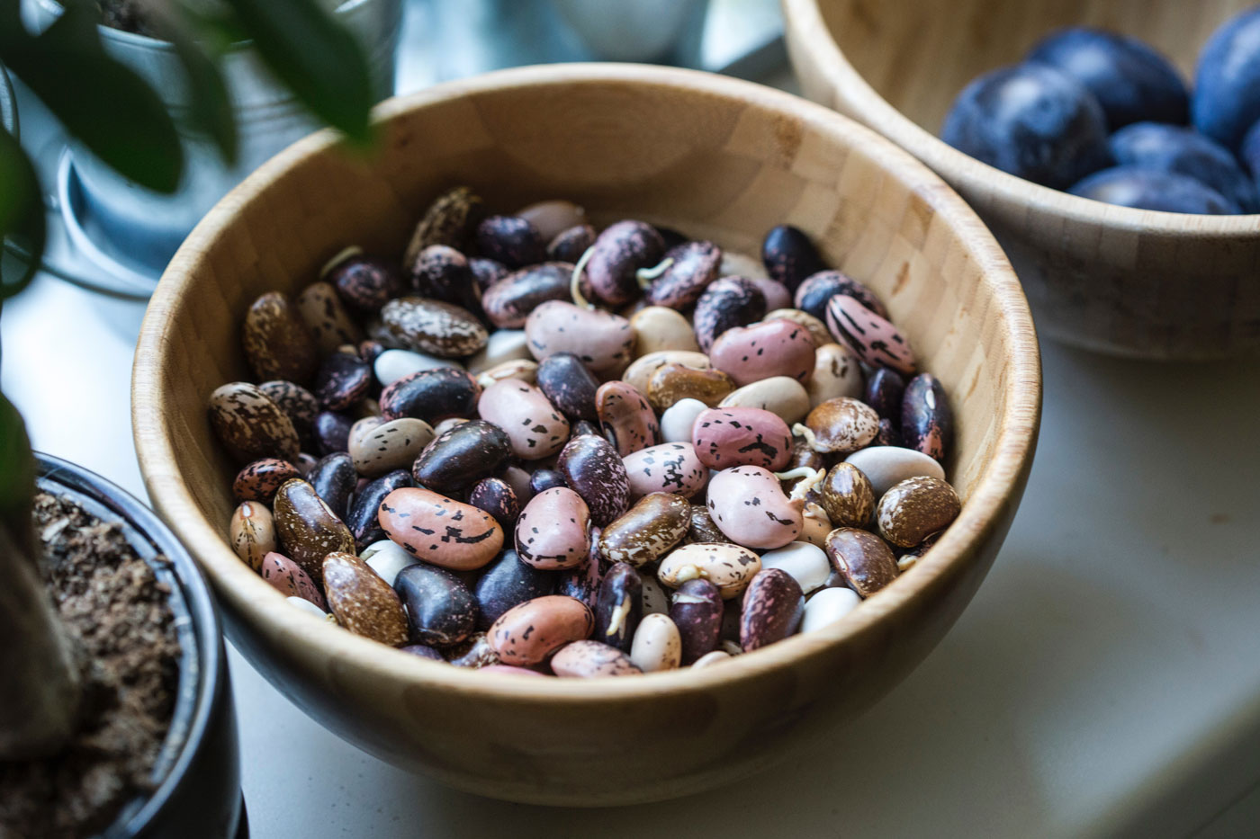 Everything you need to know about beans are here